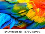 close up of scarlet macaw bird... | Shutterstock . vector #579248998