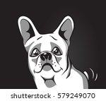 vector image of an dog  french... | Shutterstock .eps vector #579249070