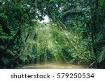 tortuguero national park  costa ... | Shutterstock . vector #579250534
