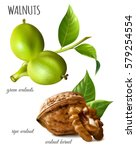 walnuts green  ripe walnut and... | Shutterstock .eps vector #579254554