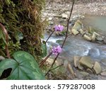 Blooming wild cyclamens near forest creek                               - stock photo
