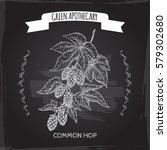 humulus lupulus aka common hop...   Shutterstock .eps vector #579302680