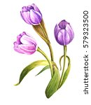 watercolor tulips | Shutterstock . vector #579323500
