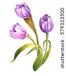 Purple Watercolor Tulips ...