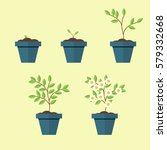 process of growing a houseplant ... | Shutterstock .eps vector #579332668