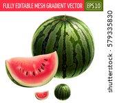 watermelon on white background. ... | Shutterstock .eps vector #579335830