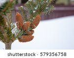 Fir Tree Branch With Cones....