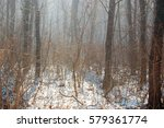 winter forest with frozen trees | Shutterstock . vector #579361774