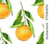 hand drawn watercolor tangerine ... | Shutterstock .eps vector #579362053