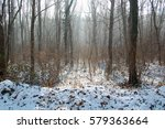 cold winter in the woods  | Shutterstock . vector #579363664