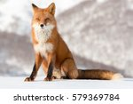 fox | Shutterstock . vector #579369784