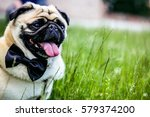 Small photo of A dog on the grass