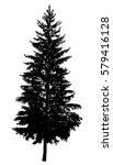 silhouette of pine tree. hand... | Shutterstock .eps vector #579416128