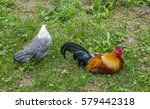 Colorful Decorative Rooster An...