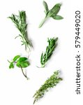 mint  sage  rosemary  thyme  ... | Shutterstock . vector #579449020