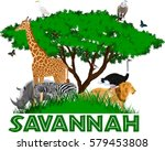 vector african savannah with... | Shutterstock .eps vector #579453808