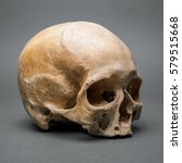 skull without a jaw | Shutterstock . vector #579515668
