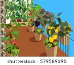 vegetable beds on the balcony... | Shutterstock .eps vector #579589390