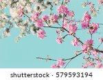 blossom apple trees on... | Shutterstock . vector #579593194