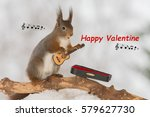 red squirrel in snow with... | Shutterstock . vector #579627730