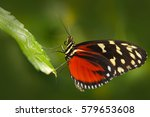 butterfly heliconius hacale... | Shutterstock . vector #579653608