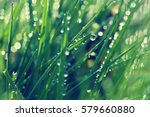 Stock photo spring beautiful natural background of green grass with dew and water drops seasonal concept 579660880
