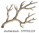 watercolor dry  bare tree ... | Shutterstock . vector #579701119