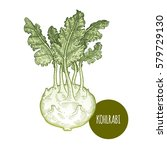 cabbage kohlrabi. hand drawing... | Shutterstock .eps vector #579729130