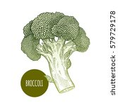 broccoli. hand drawing... | Shutterstock .eps vector #579729178