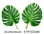 green leaves on white...   Shutterstock . vector #579732088