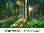 spruce tree forest  sunbeams... | Shutterstock . vector #579736630