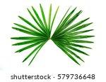 green leaves on white... | Shutterstock . vector #579736648