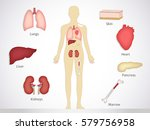 transplantation. the most... | Shutterstock .eps vector #579756958