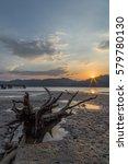stump of dead mangrove tree at... | Shutterstock . vector #579780130