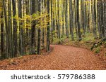 Dirt Forest Road In Autumn...