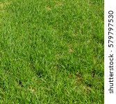Small photo of Background of a green grass. Green grass texture