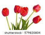 Closeup Shot Of Red Tulips In...