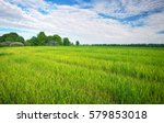beautiful green field with blue ... | Shutterstock . vector #579853018
