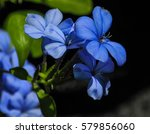 blue flowes | Shutterstock . vector #579856060