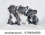 Portrait Of Three Adorable...