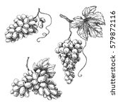 Set Of Grapes Monochrome Sketch....