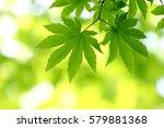 leaves of fresh green. leaves... | Shutterstock . vector #579881368