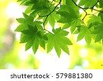 leaves of fresh green. leaves... | Shutterstock . vector #579881380