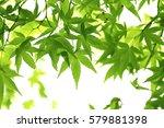 leaves of fresh green. leaves... | Shutterstock . vector #579881398