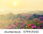 A beautiful cosmos flower in...