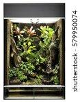 tropical rain forest terrarium...   Shutterstock . vector #579950074