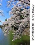 aizuwakamatsu castle and cherry ... | Shutterstock . vector #579950620