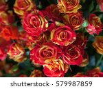 background from flowers. roses... | Shutterstock . vector #579987859