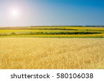 Rural Summer Landscape   Wheat...