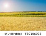 Rural Summer Landscape   Wheat...